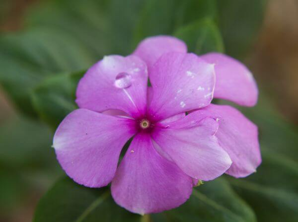 Pink Flower Beauty photo