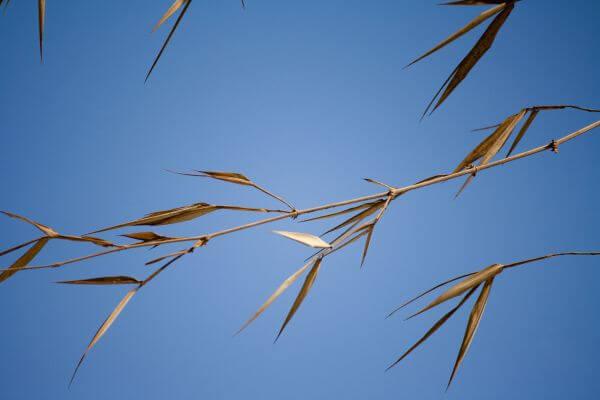 Stalks Grass Sky photo