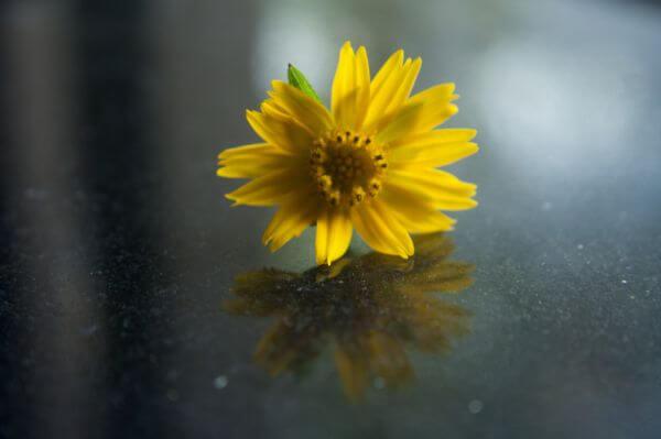Beautiful Yellow Flower photo