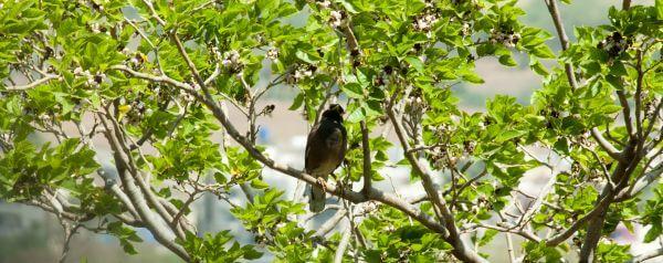 Bird Branch photo