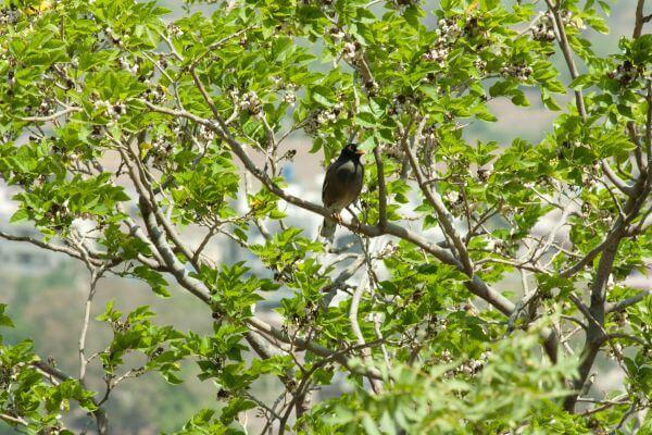 Bird Tree Branch photo