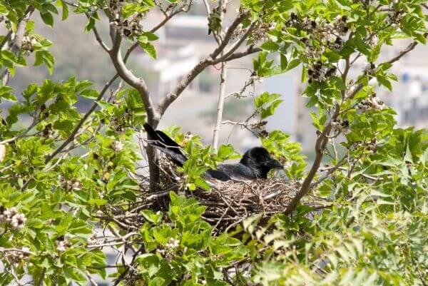 Crow Nest photo