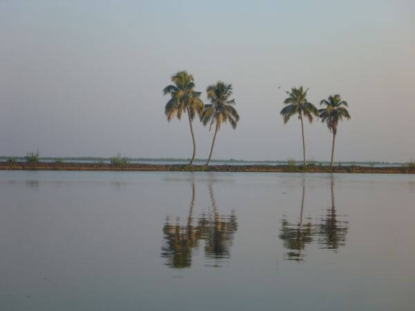 Palm Coconut Trees Reflection photo