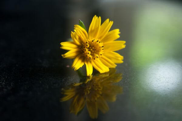 Yellow Flower Bloom photo