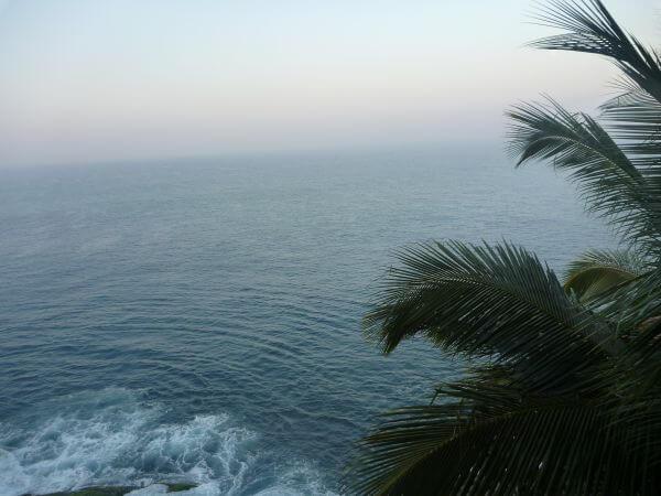 Sea View Palm Tree photo