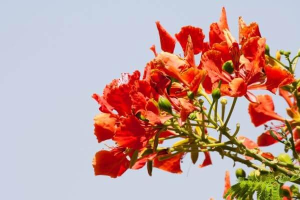 Orange Flower Leaves Tree photo