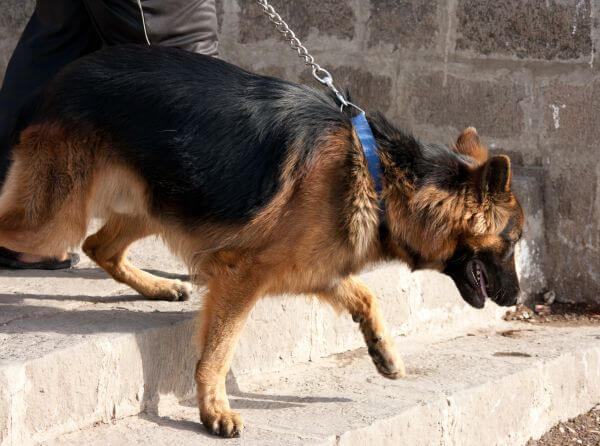 Dog Leash Walking Stairs photo