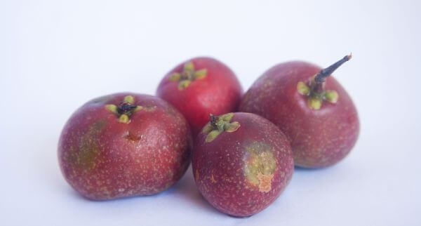 Kokum Fruits Food photo