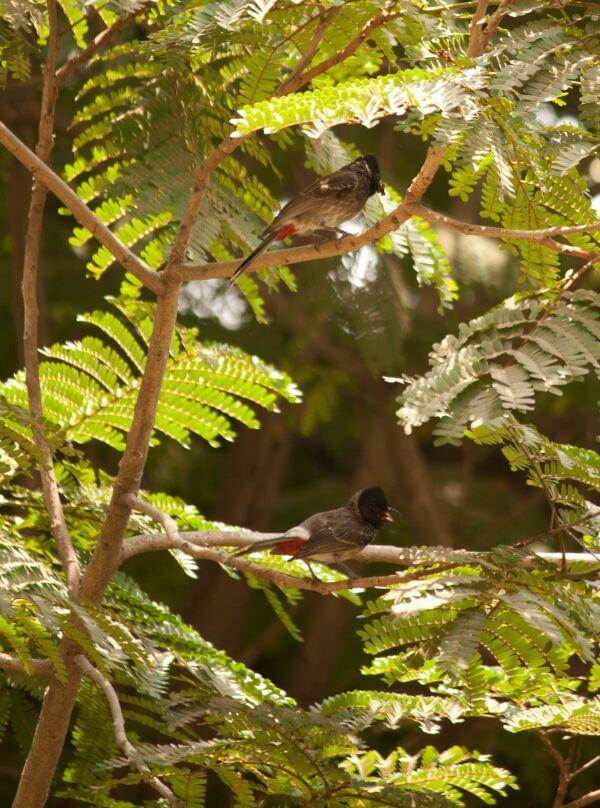 Bird Small photo