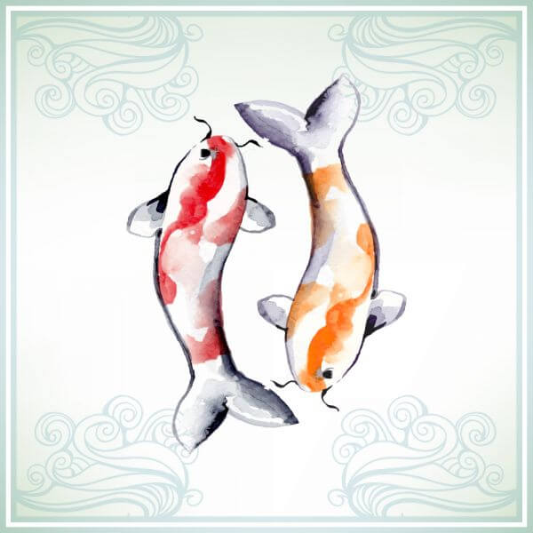 Illustration with watercolor koi fish  vector