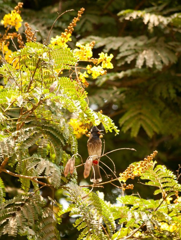 Bulbul Branch Bird photo