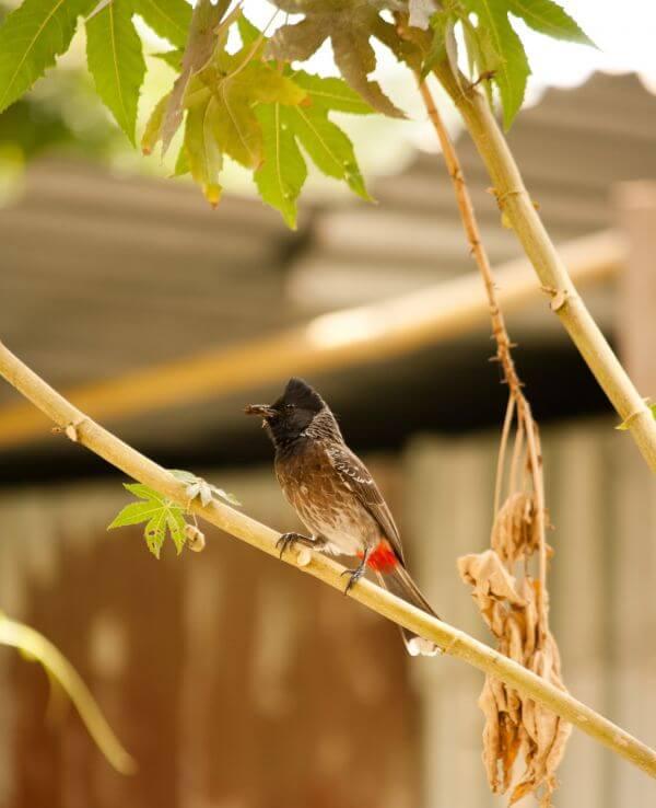 Bulbul Branch Small Bird photo