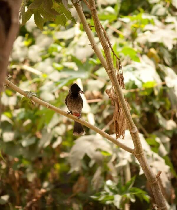 Bulbul Trees photo