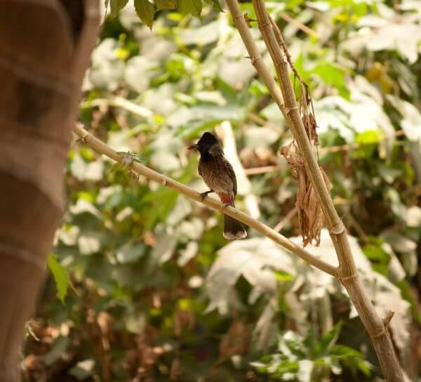 Small Bird Branch Bulbul photo