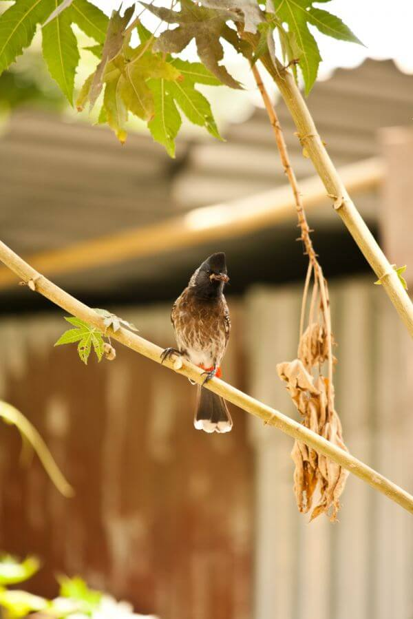 Small Bird Branch Bulbul photo