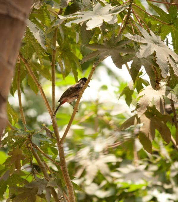 Small Bird Branch Bulbuls photo