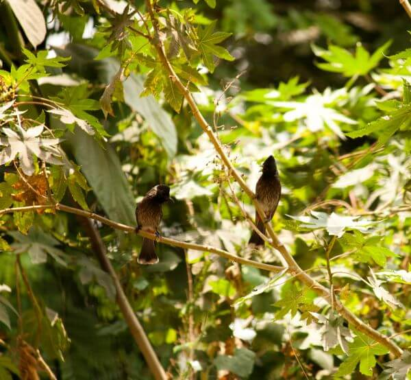 Small Bird Tree Branch Bulbul photo