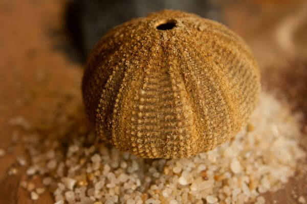 Sea Objects Sand photo