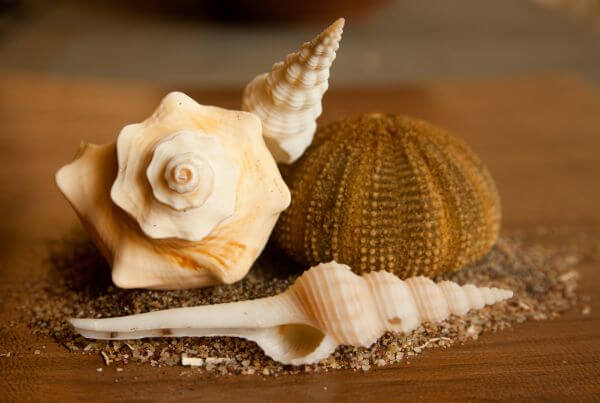 Sea Shells photo