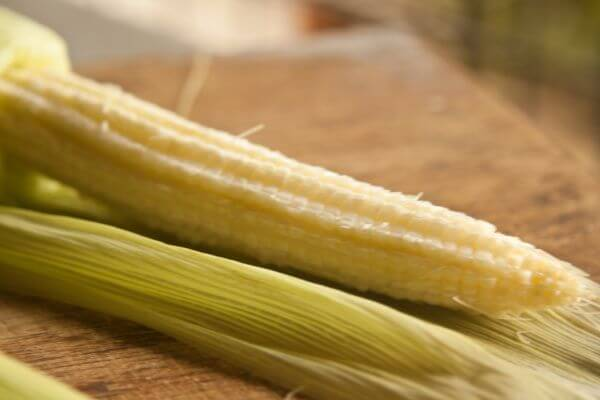 Corn Stalk photo