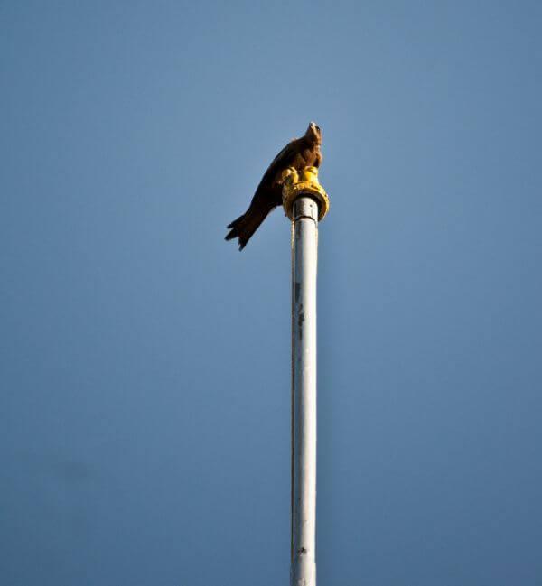 Bird On Pole photo