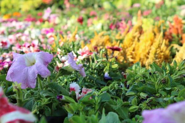 Sea Of Flowers photo