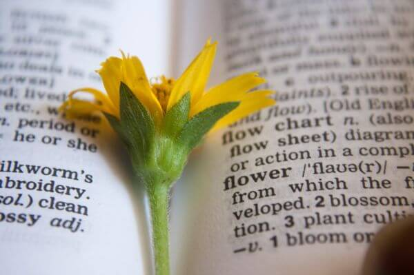 Flower Dictionary Word photo