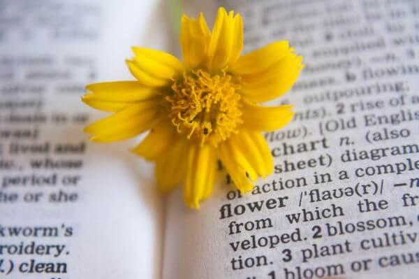 Flower Dictionary photo