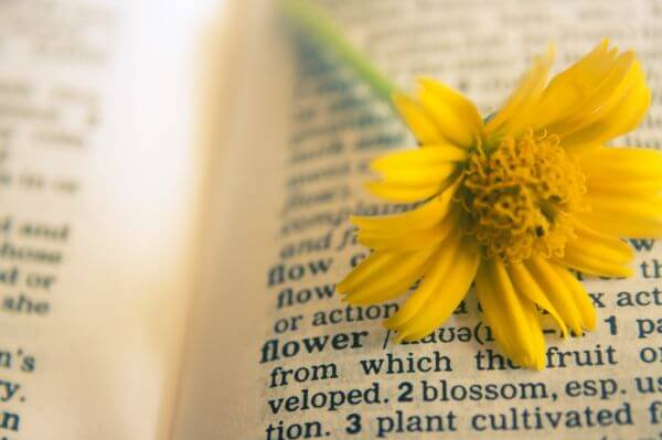 Flower In Dictionary photo