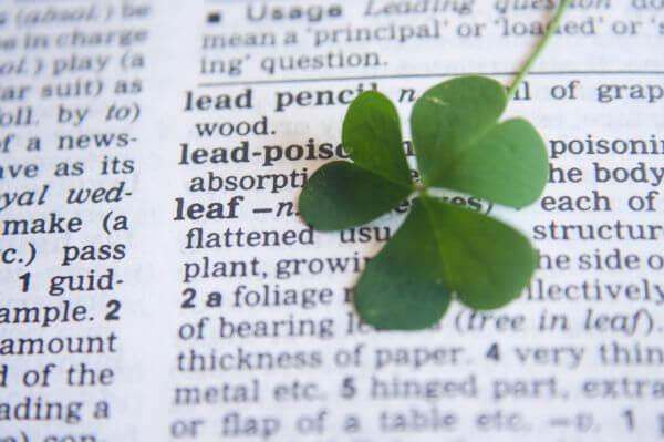 Leaf Dictionary Word photo