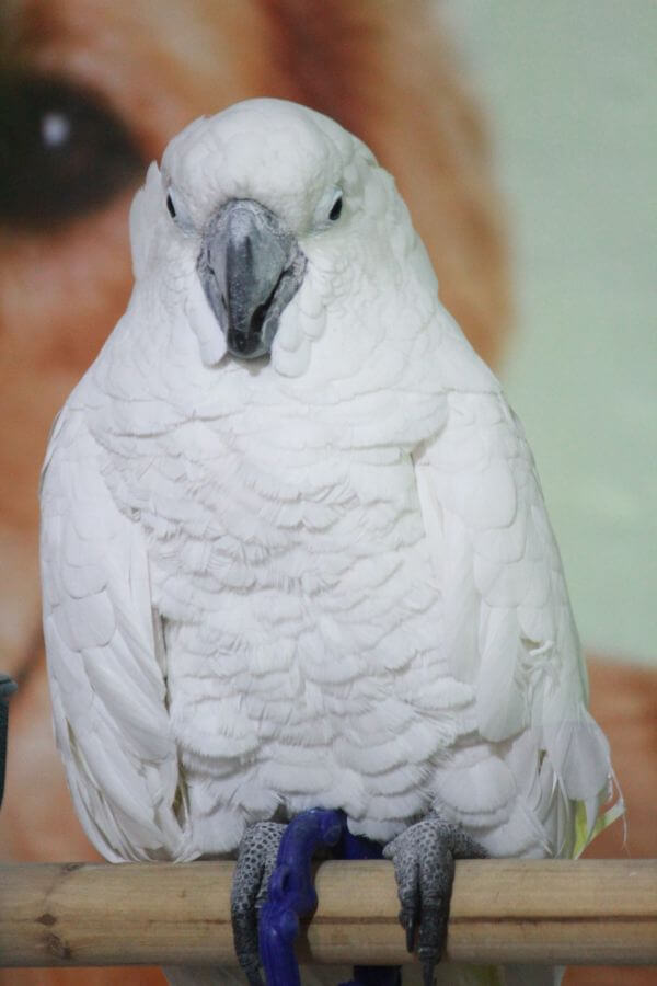 White Bird Sitting photo