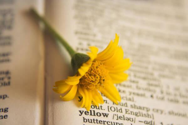 Yellow Flower Dictionary photo