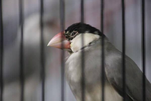 Bird In Cage 2 Bird Show photo