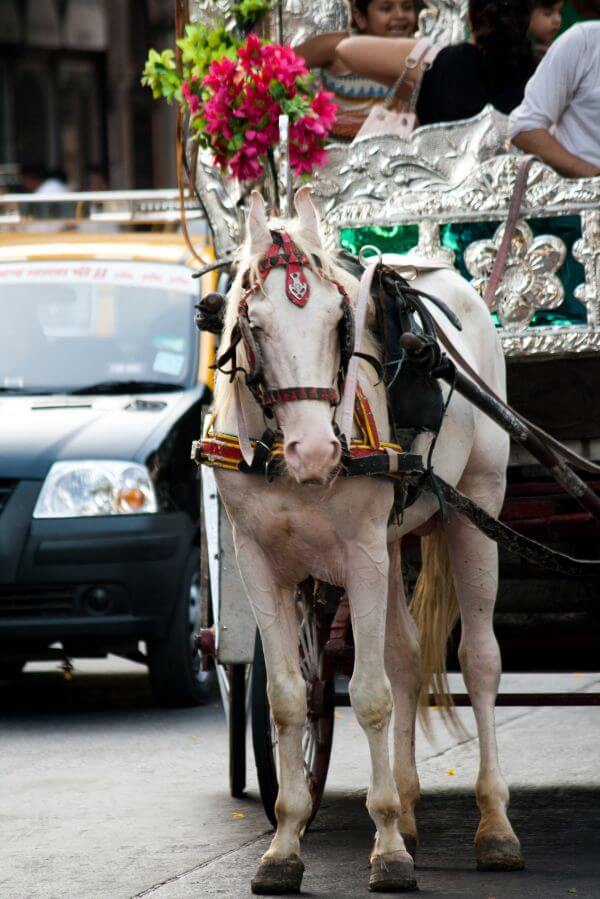 Horse Carriage photo