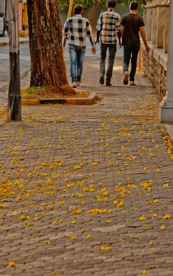 Pavement Flowers Friends Walking photo
