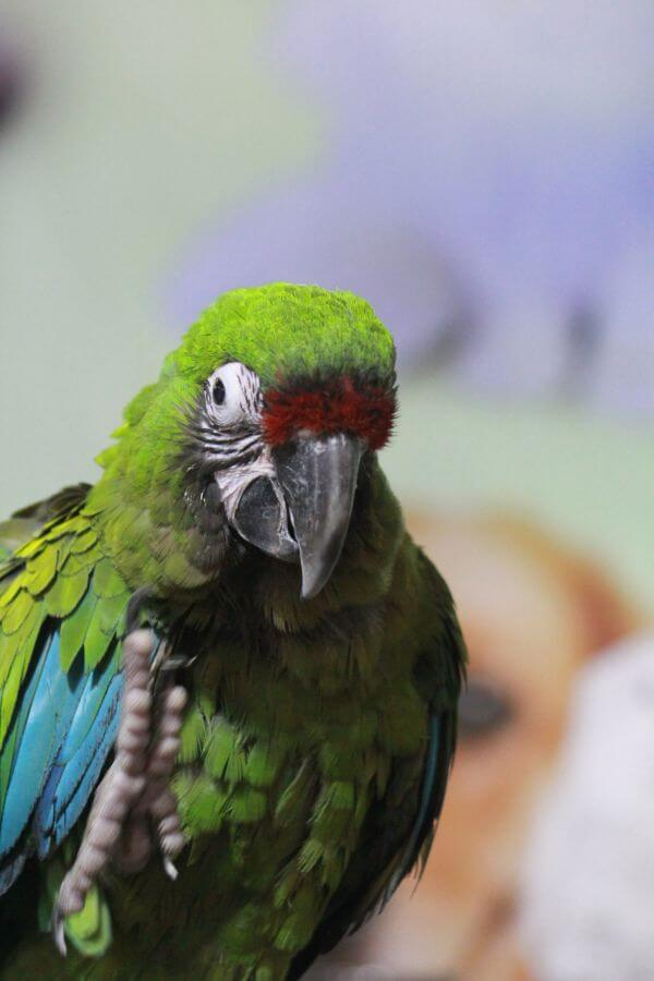 Green Parrot Bird Show photo