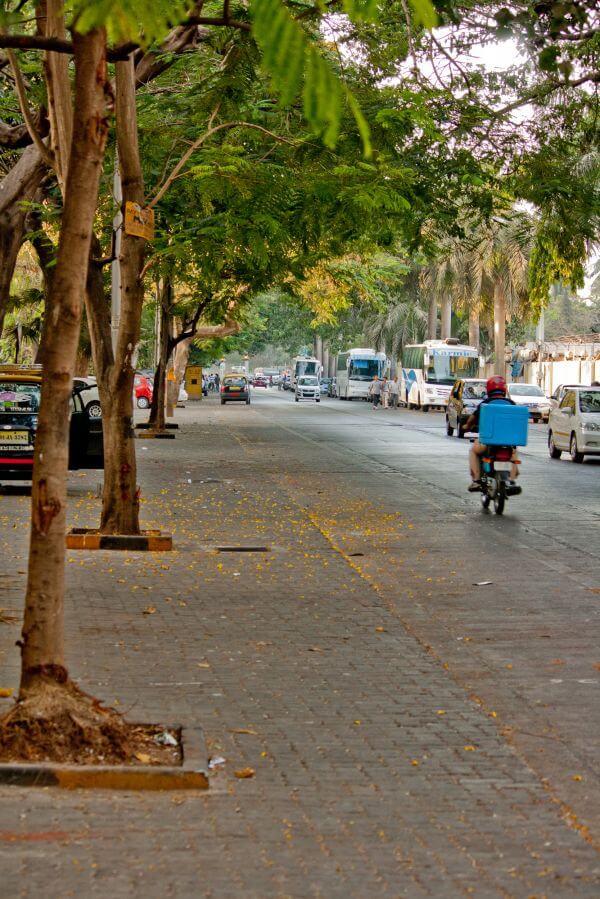 Tree Lined Street photo