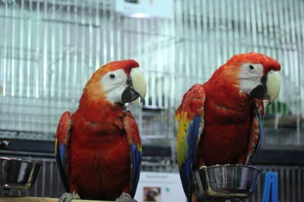 Macaws Sitting Bird Show photo