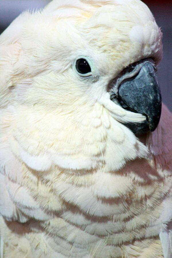 White Bird Portrait photo
