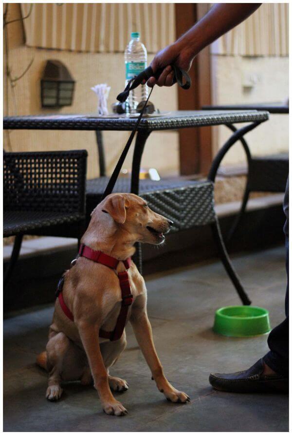 Dog Sitting Table photo