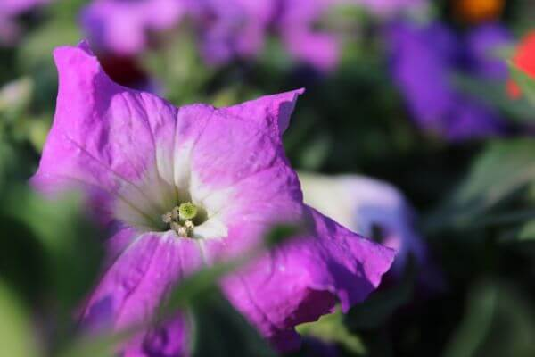Bright Purple Flower photo