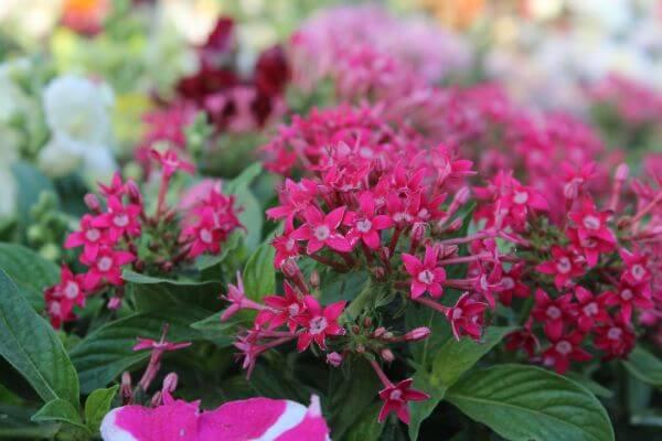 Fresh Pink Flowers photo