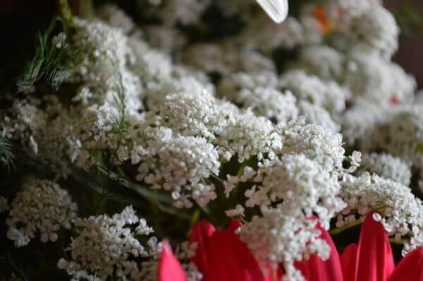 Flower Bouquet Closeup photo
