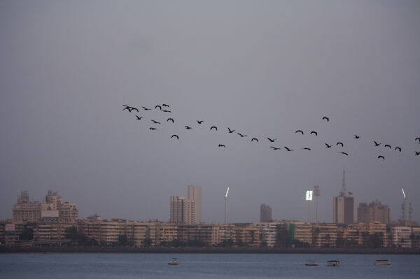 Fleet Of Birds Over Sea photo