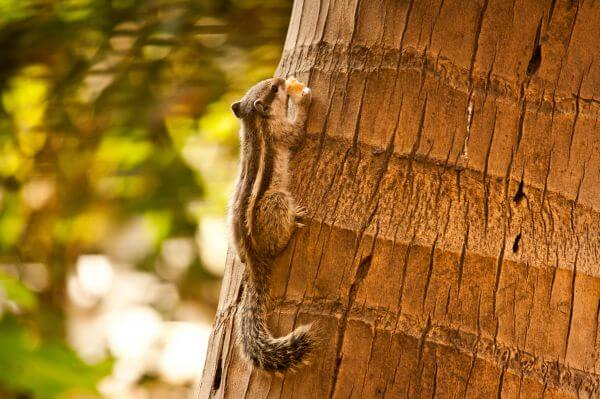 Squirrel Eating On Tree photo
