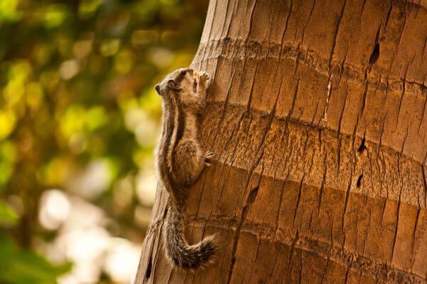 Squirrel On Tree Closeup photo
