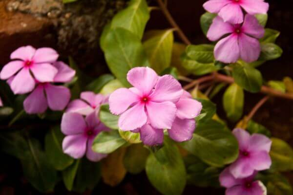 Bunch Of Pink Flowers photo