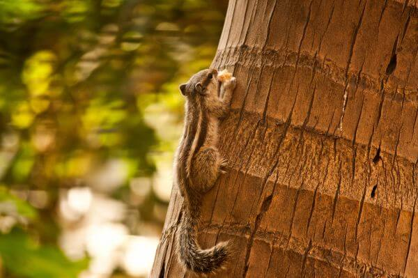 Squirrel On Tree photo