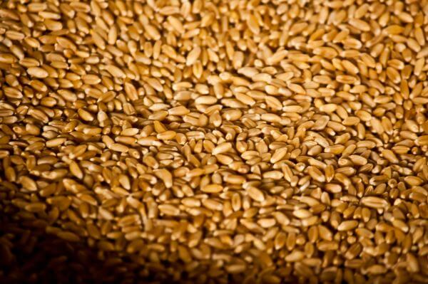 Wheat Grains Storage photo