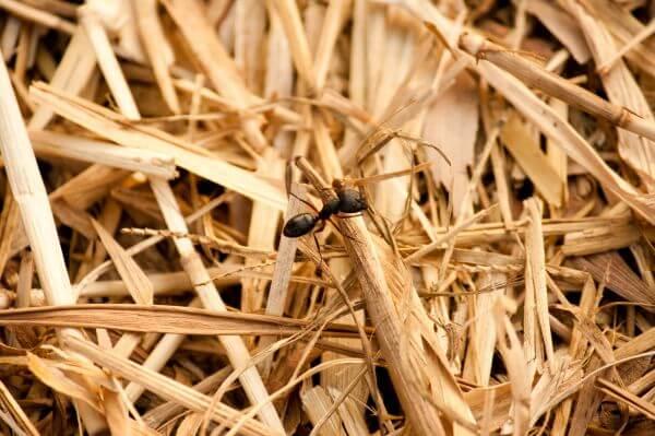 Ant Closeup photo